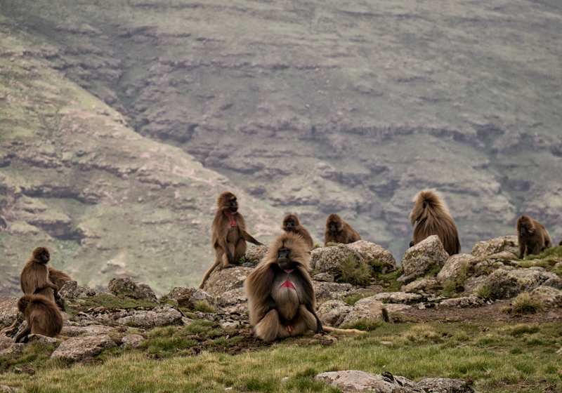 Noord Ethiopië individuele rondreis